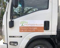 Clusia-POdocarpus-Delivery-scaled-e1595604019182