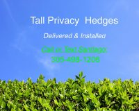 Tall-Privacy-Hedges-South-Florida-scaled